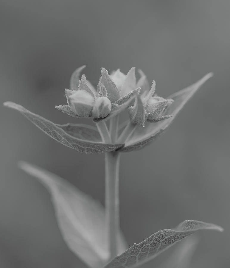 Macro World Black And White by Dan Sproul