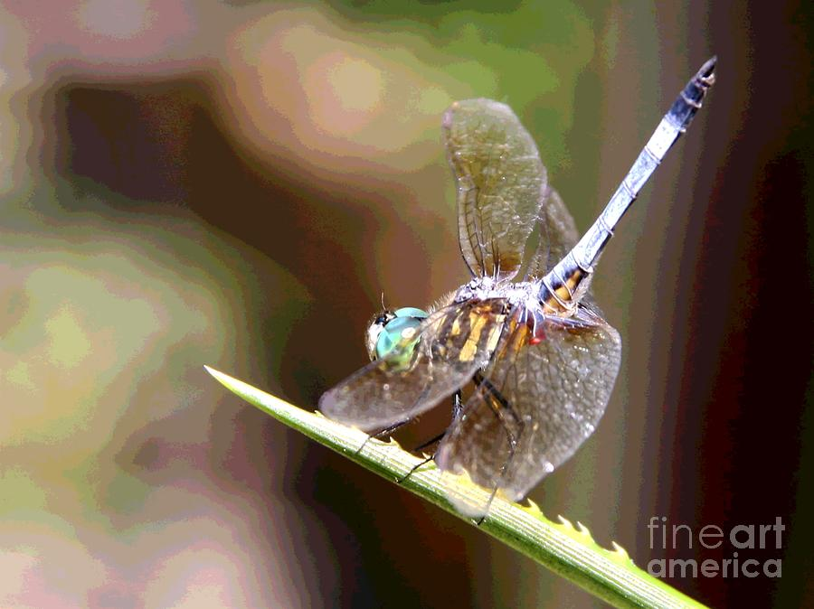Madame Dragonfly Practicing the Fan Moves by Philip and Robbie Bracco