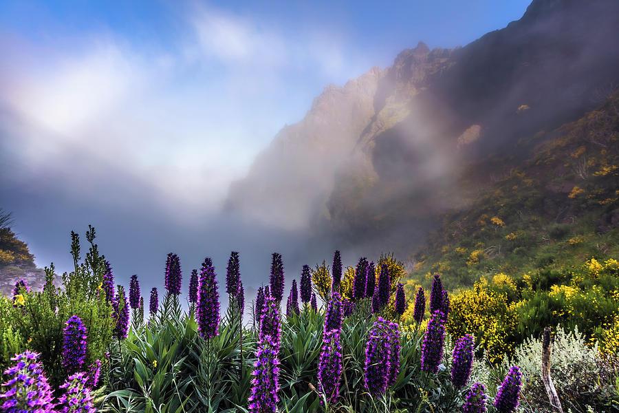 Madeira by Evgeni Dinev