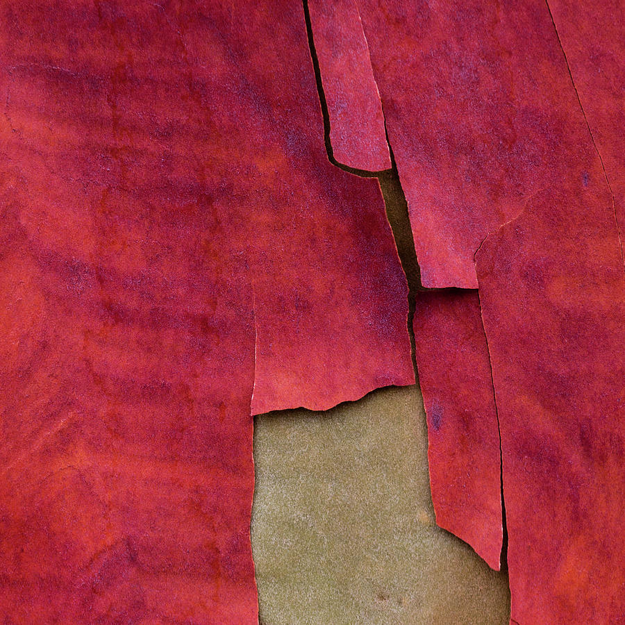 Madrone Tree Bark 06 by Carol Leigh