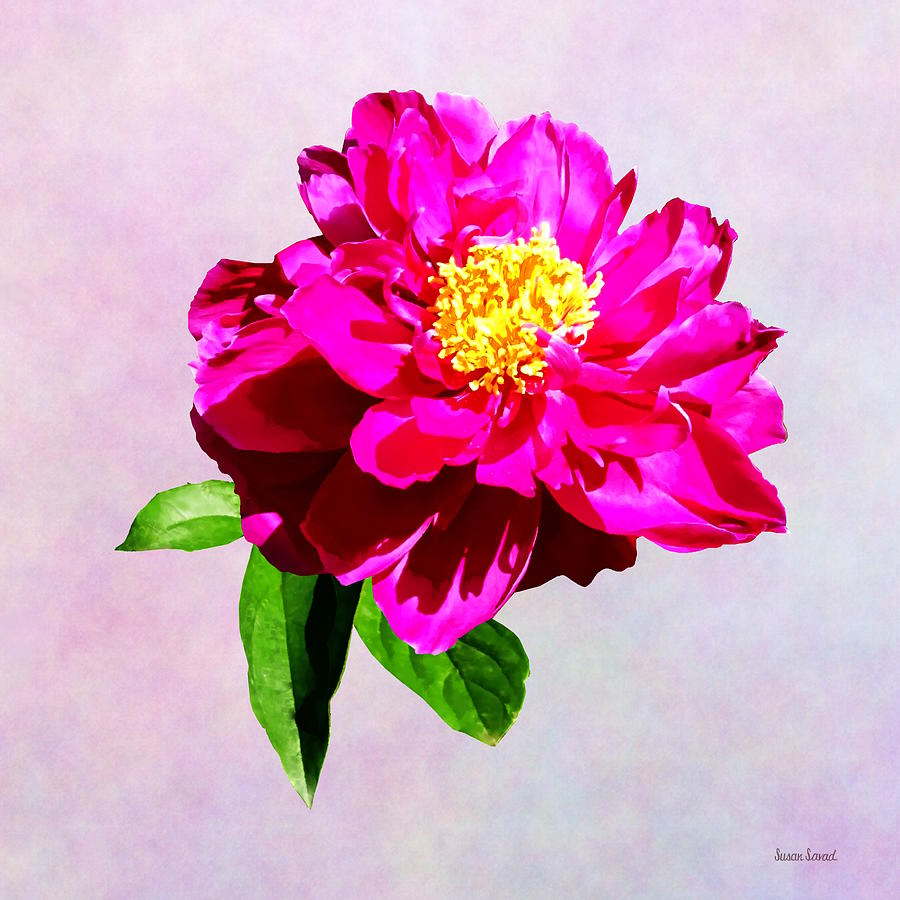 Magenta Peony in Sunshine by Susan Savad