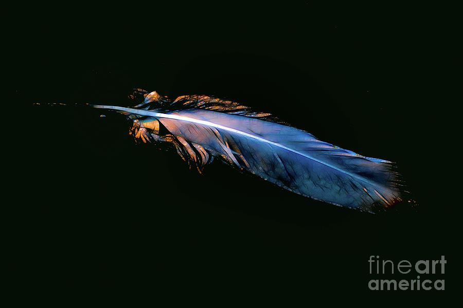 Magic feather by Casper Cammeraat