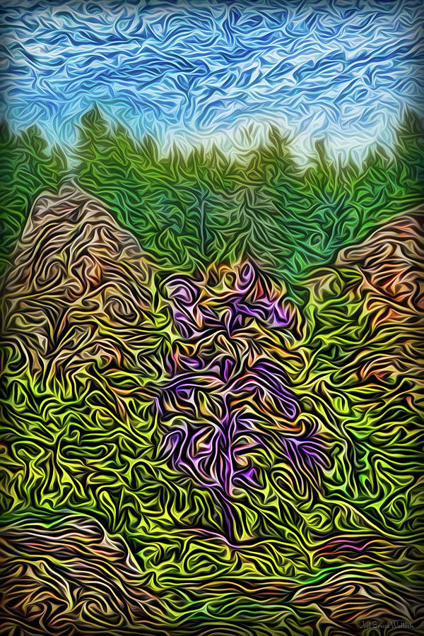Magic Mountain Forest by Joel Bruce Wallach