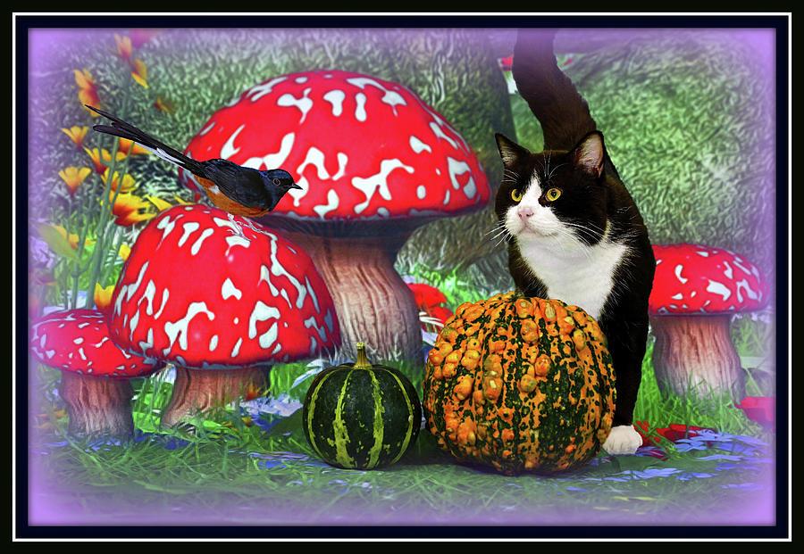 Magical Cat And Bird Fantasy Digital Art