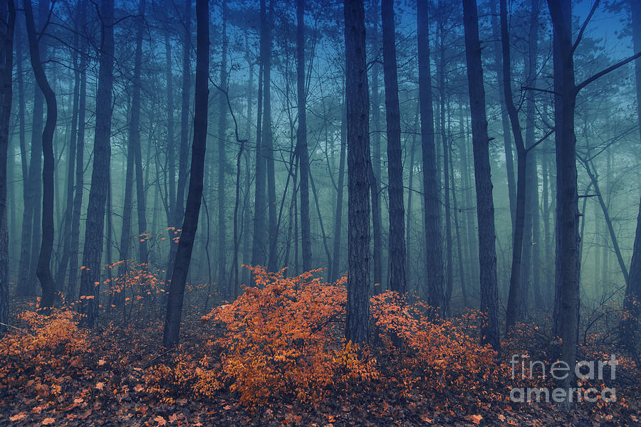 Magic Photograph - Magical Foggy Seasonal Forest Tree by Babaroga