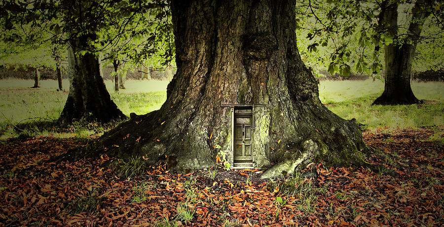 Magical Tree With Fairy Door At Its Base Photograph By