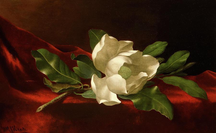 Martin Johnson Heade Painting - Magnolia, 1885-1895 by Martin Johnson Heade