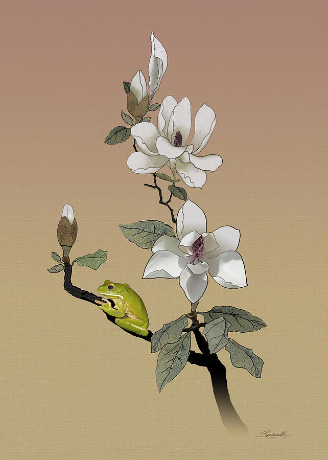 Magnolia and Tree Frog by M Spadecaller