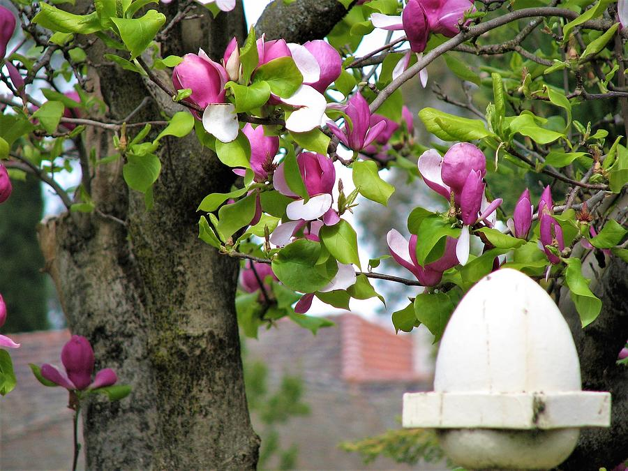 Magnolia Display by Joan Stratton