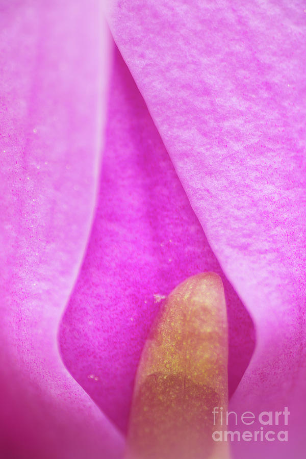 Abstract Photograph - Magnolia Flame by Steven Dillon