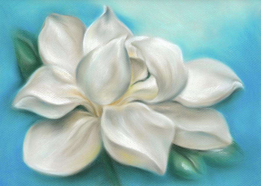 Magnolia Grandiflora Flower on Blue by MM Anderson