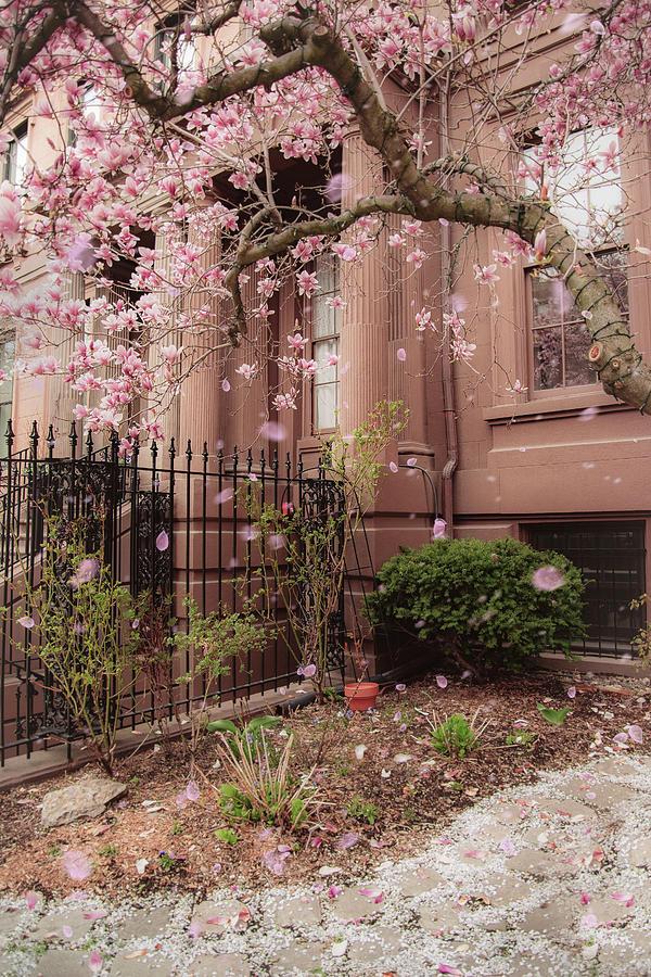 Magnolia Spring - Back Bay Boston by Joann Vitali