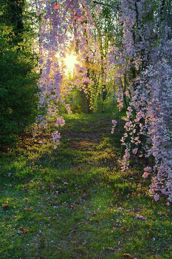 Magnolia Tree Sunset by Nathan Bush
