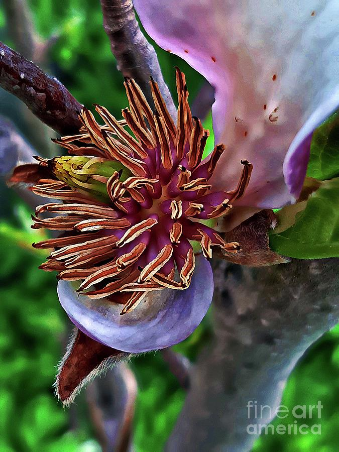Magnolias heart by Jolanta Anna Karolska