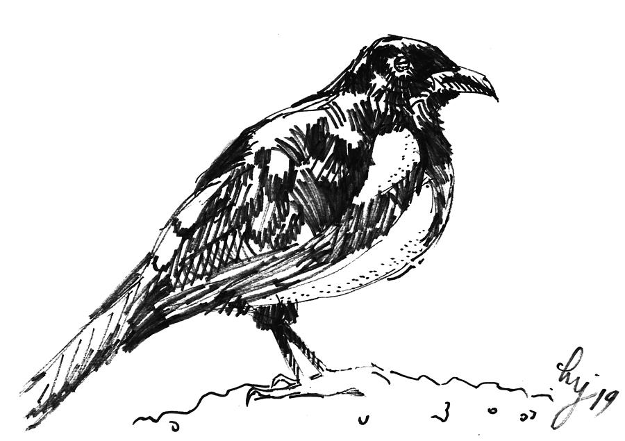 magpie drawing - black and white bird illustration by Mike Jory