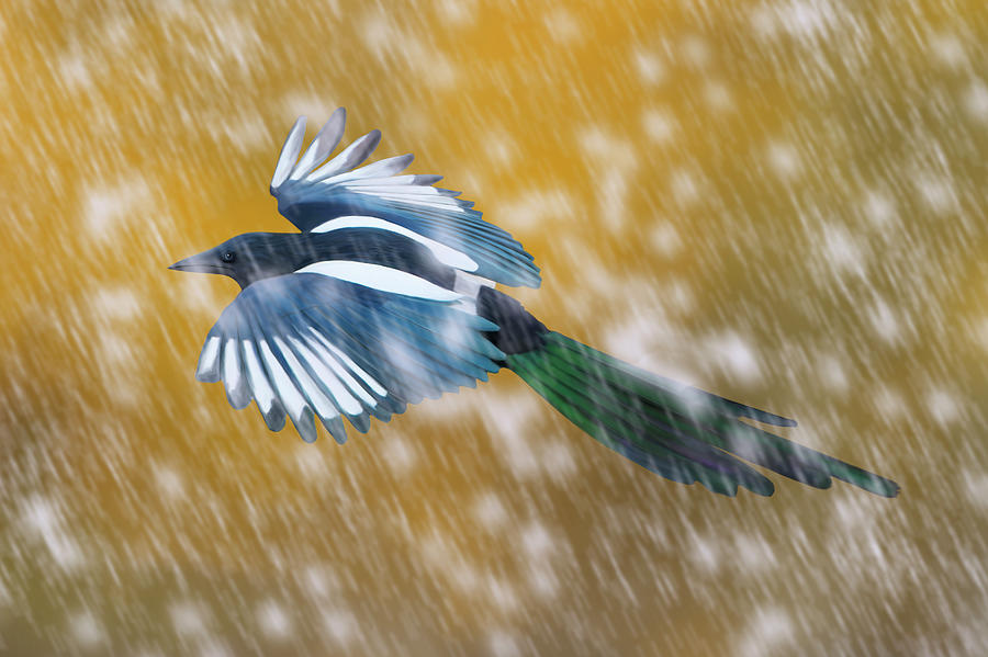 Magpie in Autumn Snow by Mark Miller