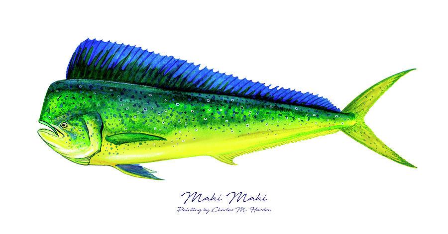 Mahi Mahi Painting