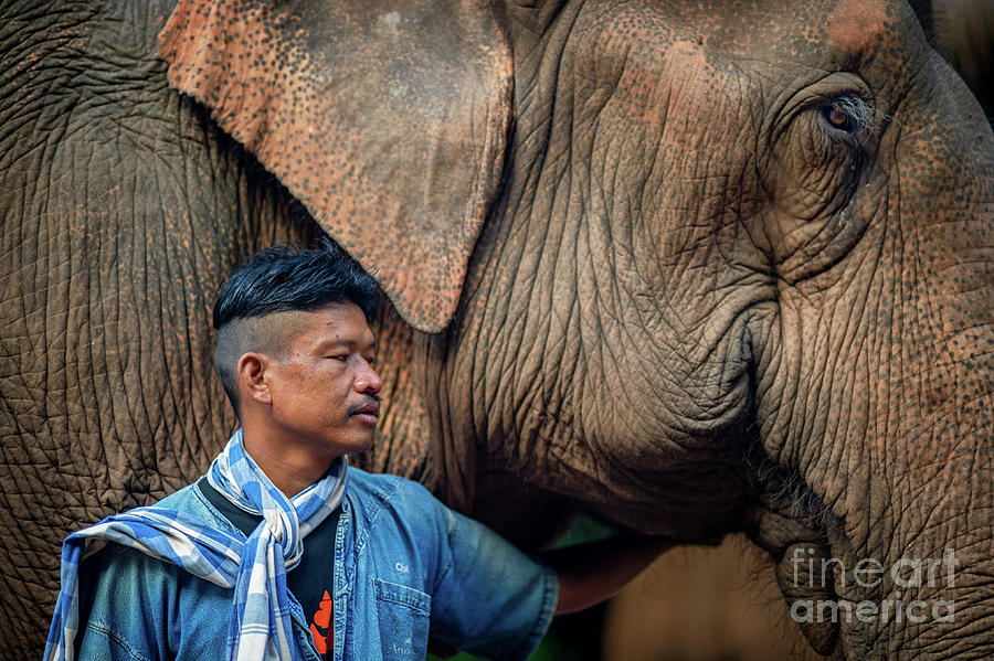 Mahout Chet 201908247 by Lee Craker