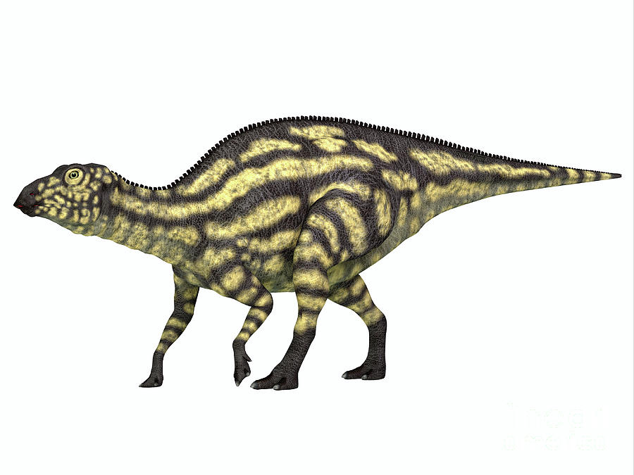 Maiasaurus Dinosaur Young Juvenile by Corey Ford