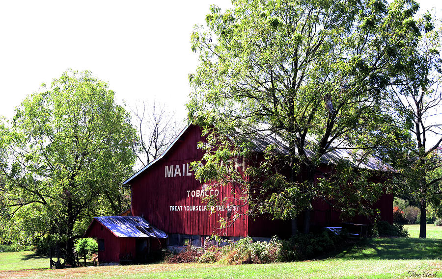 Mail Pouch Tobacco Barn In The Summer by Trina Ansel