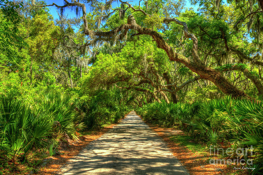 Majestic Main Road Shadows Cumberland Island National Seashore Georgia Landscape Art by Reid Callaway