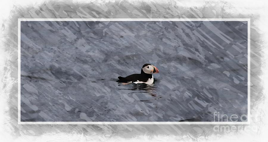 Maine Puffin by Marcia Lee Jones