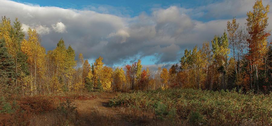 Maine Wilderness Color 2 by Rick Hartigan