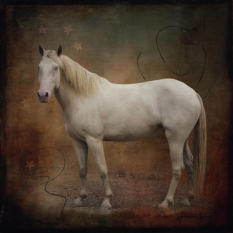Horse Photograph - Majestic Bandit by Linda Lee Hall