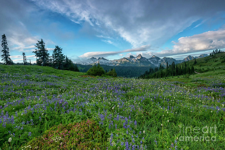 Majestic Mountain Morning by Mike Dawson