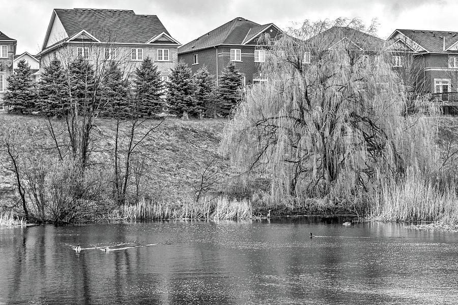 Reeds Photograph - Major Oak Park bw by Steve Harrington