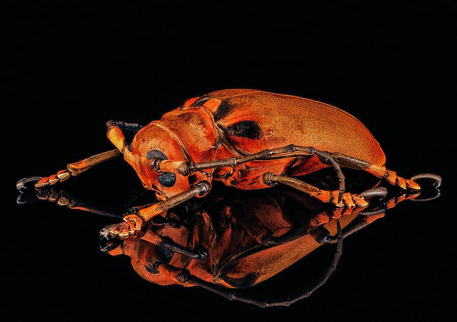 Malaysian Longhorn Beetle by Gary Shepard