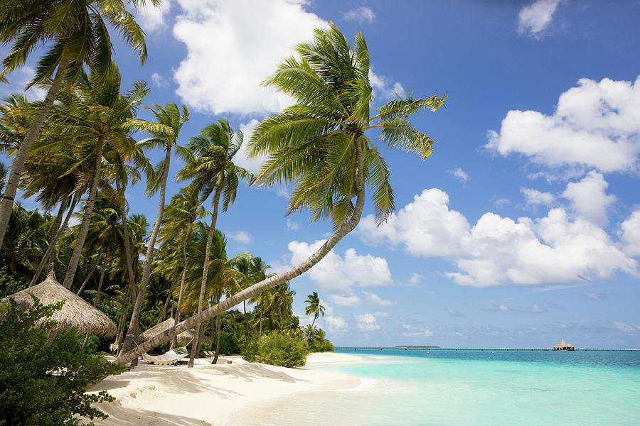 Maldives Beach Photograph by Webphotographeer