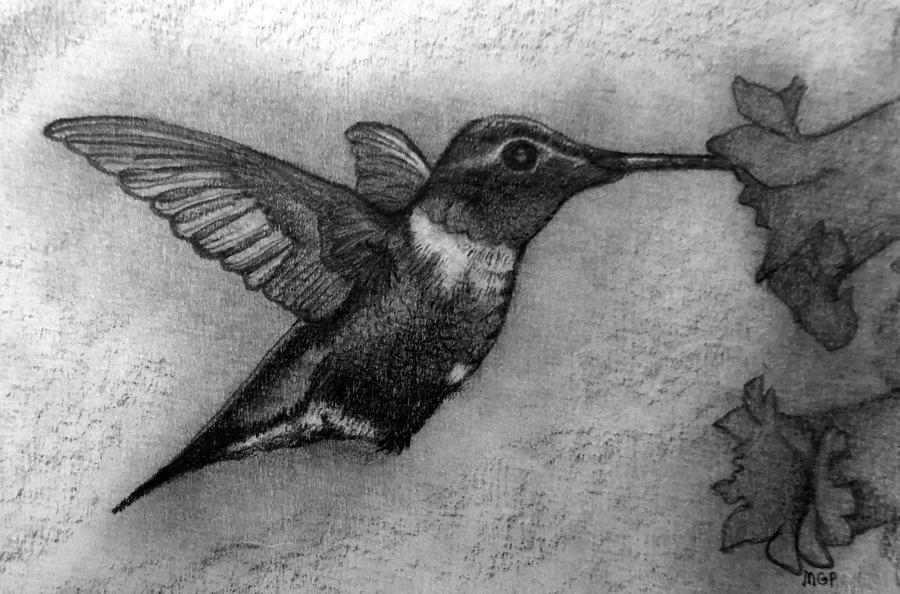 Male Ruby-throated Hummingbird Drawing