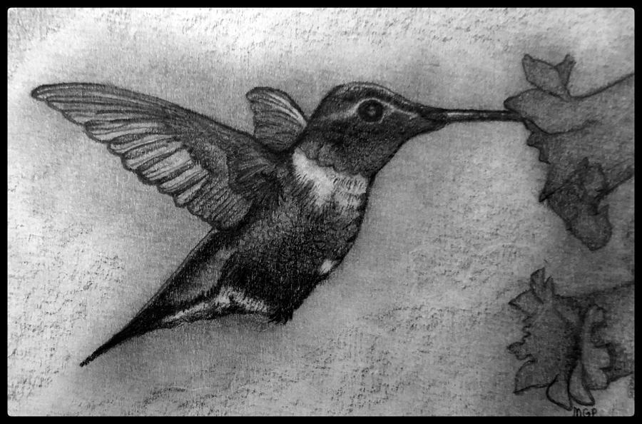 Male Ruby-throated Hummingbird W/ Boarder Drawing
