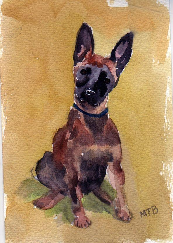 Malinois Pup by Mimi Boothby