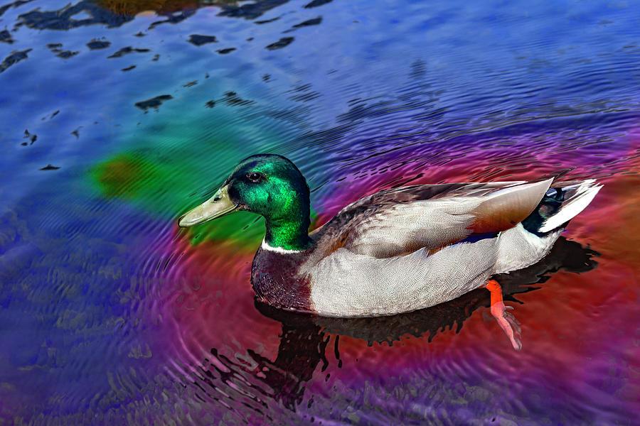 Mallard Duck Series 7862 by Carlos Diaz