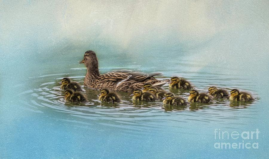 Mallard Mom with 11 babies by Eva Lechner