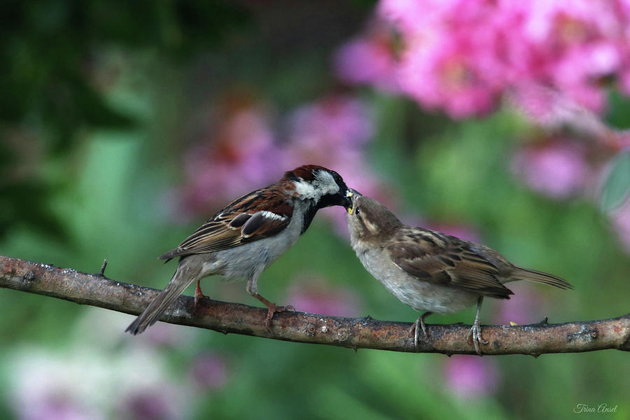 Mama and Baby Sparrow by Trina Ansel
