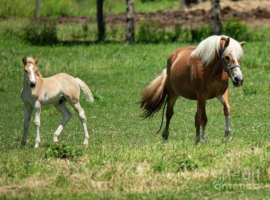 Mama And Colt by Michael D Miller