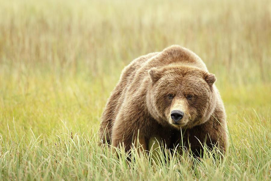 Mama Bear by Ann Skelton