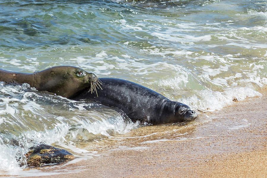 Mama Monk Seal and Pup at the Shoreline, No. 4 - RB00 and PK1 by Belinda Greb
