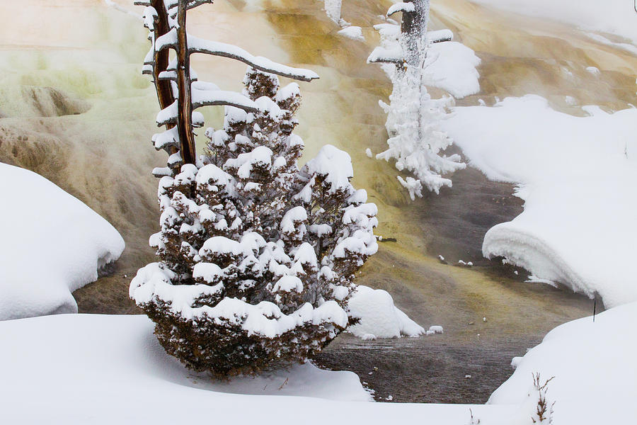 Mammoth Hot Springs In Winter Photograph by Sebastian Kennerknecht