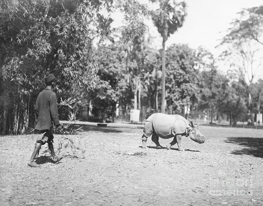 Man Attempting To Catch A Rhinoceros Photograph by Bettmann