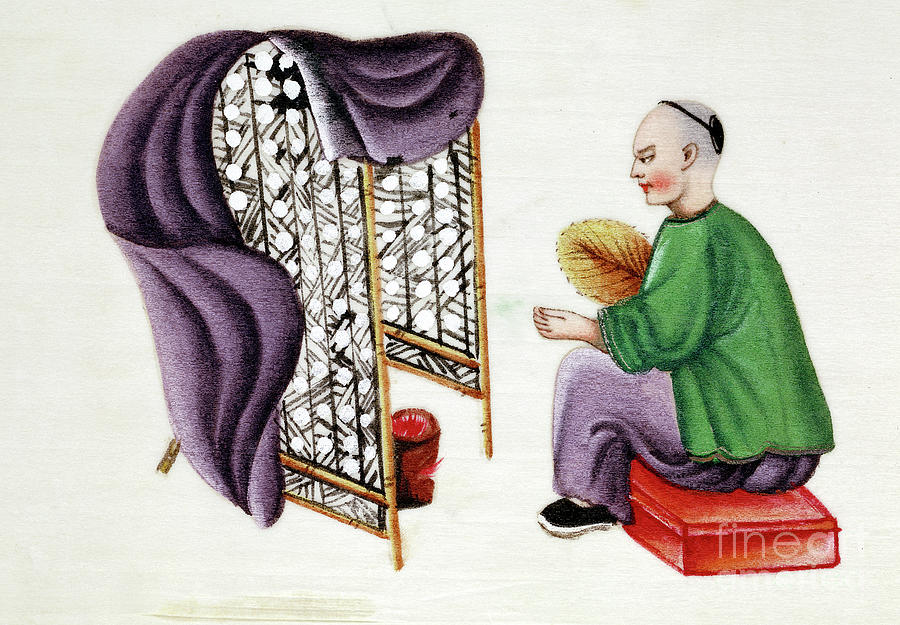 Man Drying Silkworm Cocoons, 19th Drawing by Print Collector