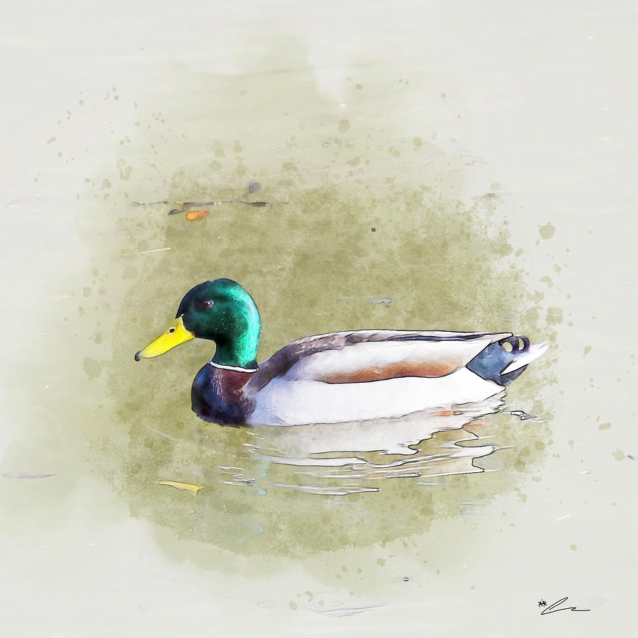 Man duck by Starsphinx