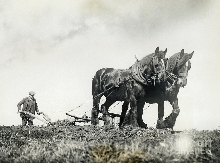 Man Ploughing Field With Horse Team Photograph by Bettmann