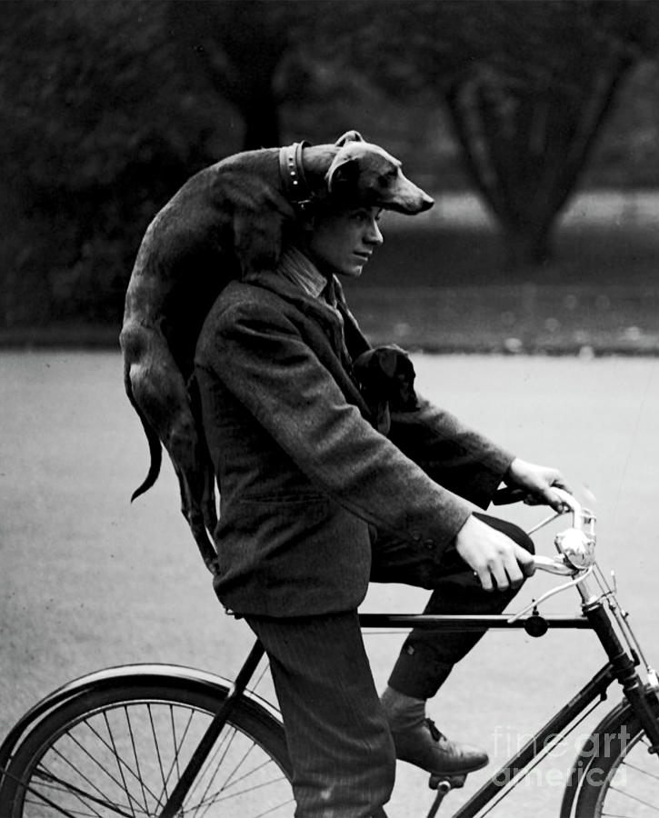 Man With Dog On Cycle - 1931 by Doc Braham