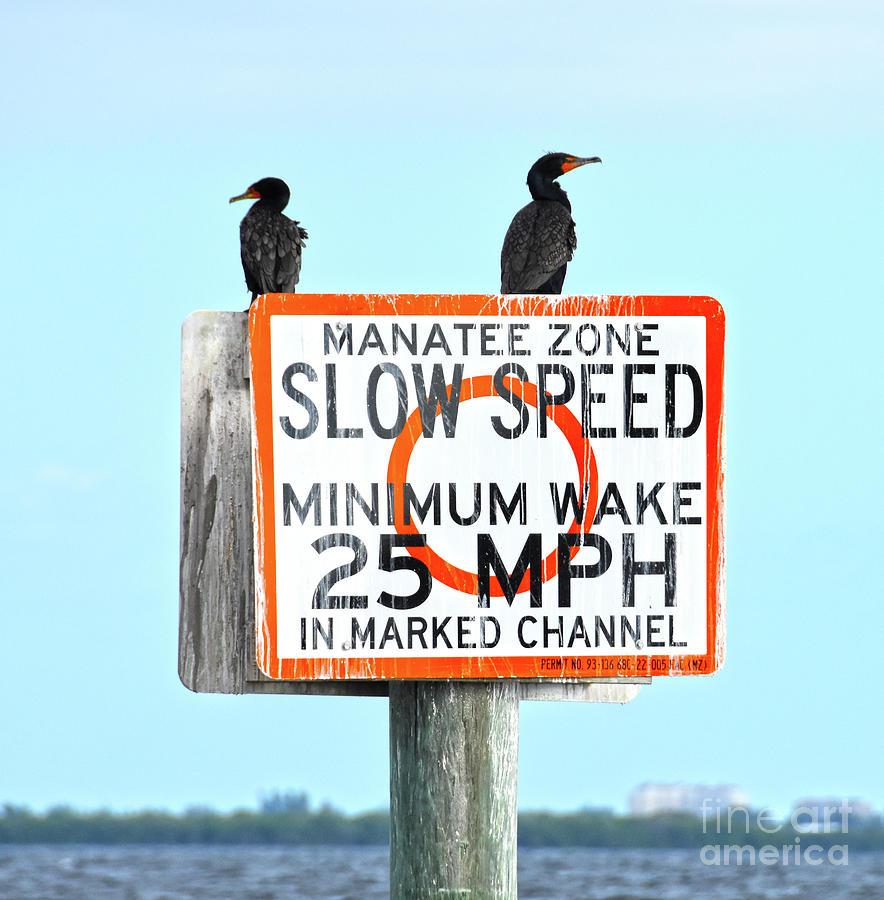 Manatee Zone by Christine Dekkers