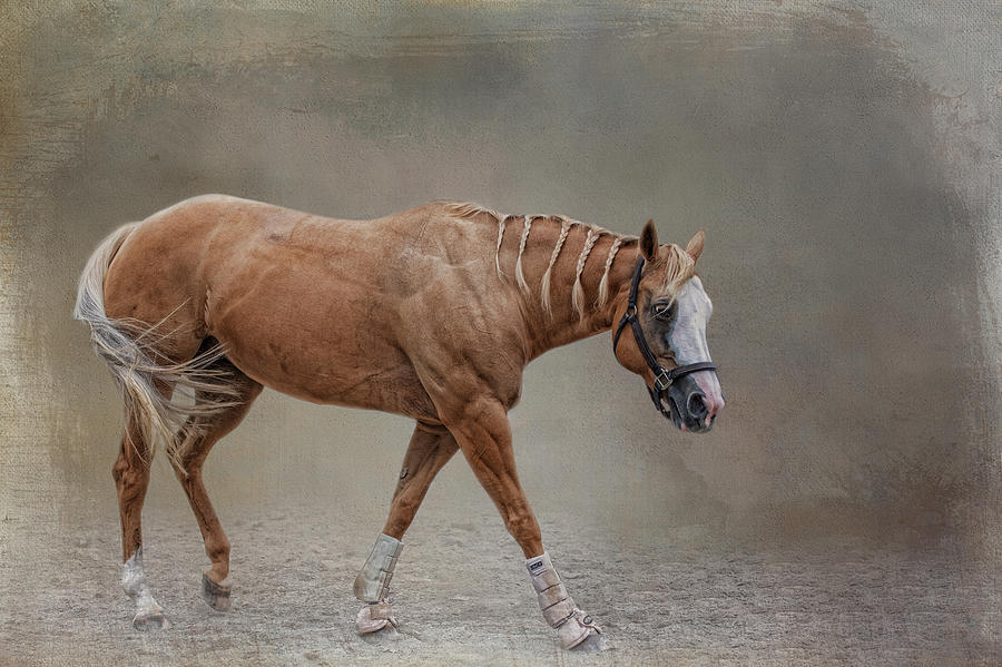 Maned Beauty  by Kelley Parker
