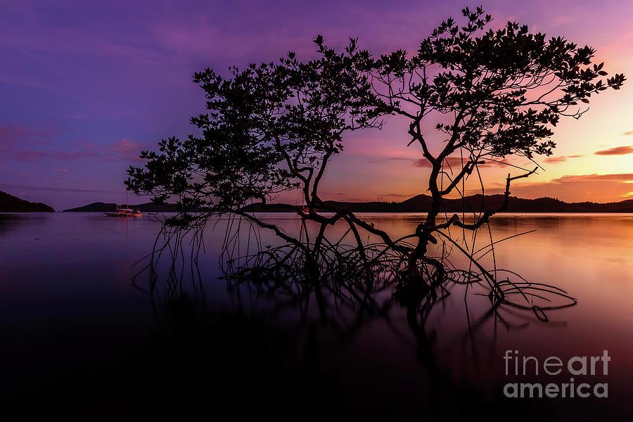 Mangrove Photograph by Marian Gociek